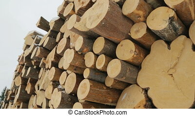 Big pile of logs in winter forest