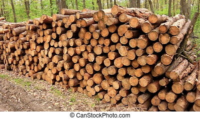 Big pile of woods in a forest road