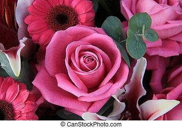 big pink rose in close up