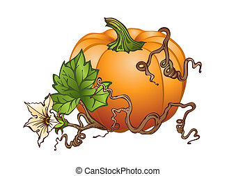Big pumpkin - illustration based on hand drawing of big...