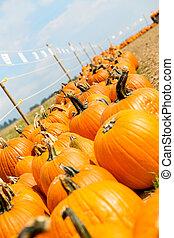 big pumpkins on a market place