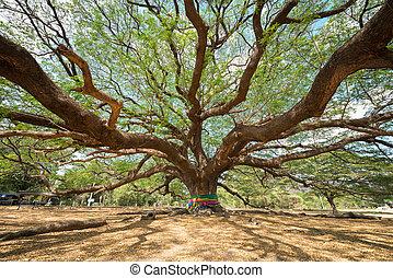 big Rain Tree