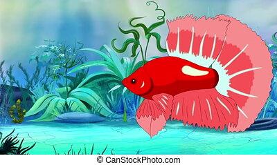 Big Red Aquarium cockerel fish in a tank - Red Aquarium...