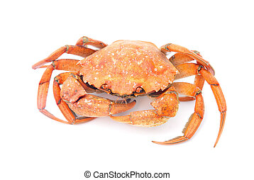 big red boiled crab isolated on white background