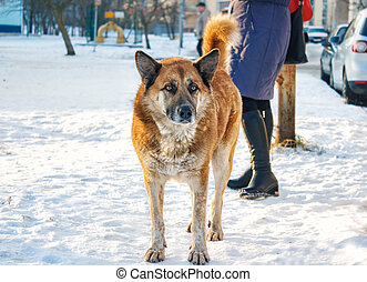 big red dog standing on snow