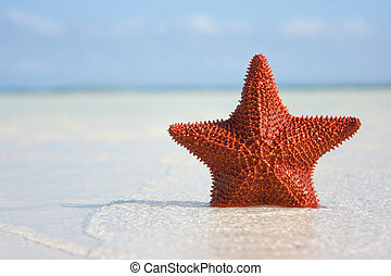 Big red starfish