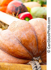big ripe pumpkin close up ribbed part of vegetable on blurred background of seasonal vegetables red pepper
