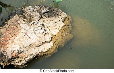 Big rock in Chinese garden