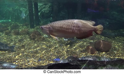 big sea fish in the aquarium. aquarium with marine life. fish and corals