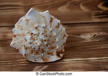Big sea shell lying on the surface of the wooden aged background. close up