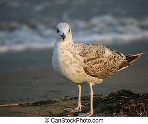 seagull on the beach in summer