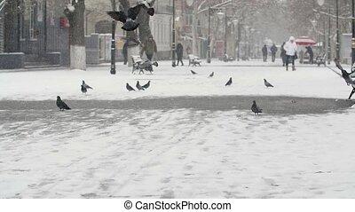 Big seagulls landing and seeking food on a river embankment...