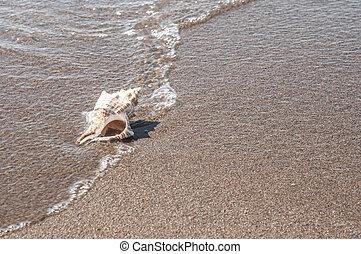 Big seashell on the sand