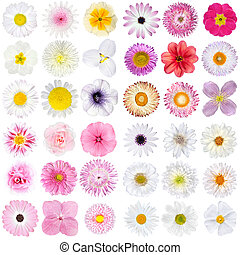 Big Selection of Various Pink, and White Flowers Isolated on White Background