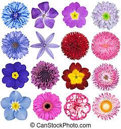 big, selekce, o, colorful květovat, osamocený, oproti neposkvrněný, grafické pozadí