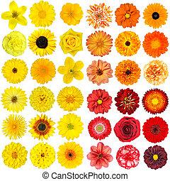 big, selekce, o, rozmanitý, pomeranč, nach, a, červené šaty květovat, osamocený, oproti neposkvrněný, grafické pozadí
