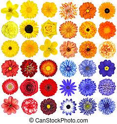 big, selekce, o, rozmanitý, pomeranč, nach, oplzlý i kdy červené šaty, květiny, osamocený, oproti neposkvrněný, grafické pozadí