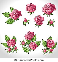 Big set of a beautiful colored roses. Vector illustration