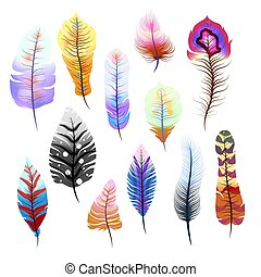 Big set of different colorful feathers on white