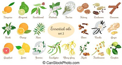 Big set of essential oil plants. Vanilla, cinnamon, jasmine, tea tree, bergamot, sandalwood, patchouli etc.