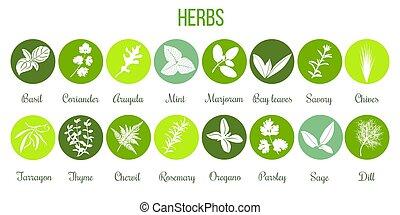 Big set of flat culinary herbs in circles. White Silhouettes
