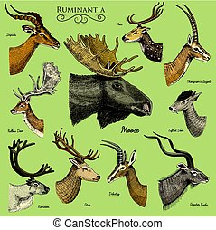 Big set of Horn, antlers Animals moose or elk with impala, ...