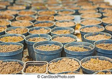 big set of pots for growing seedlings