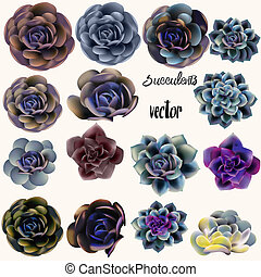 Big set of vector succulents for design