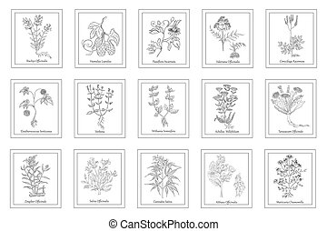 Big Set with Hand Drawn Herbals in Frames - Set of Herbals ...