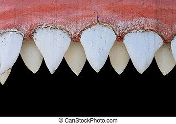 shark mouth  - big shark mouth as nice animal background