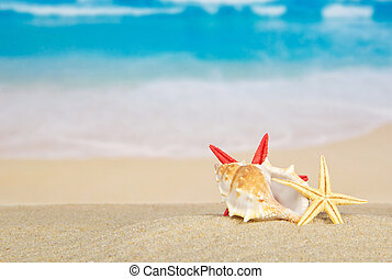Big sink and starfishes on sea sand - The big sink and...