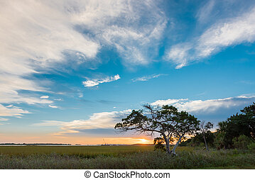 Big Sky and Small Tree on Tybee Island