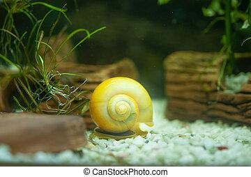 Big Snail in a beautiful aquarium