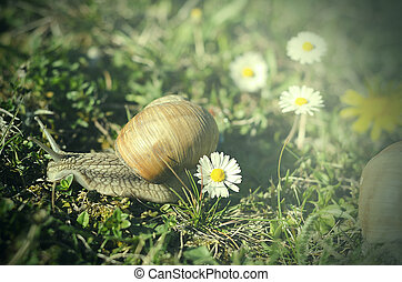 Snail - Big Snail in the green grass.