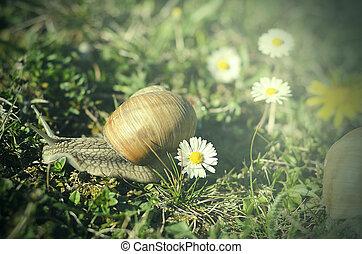 Snail - Big Snail in the green grass.