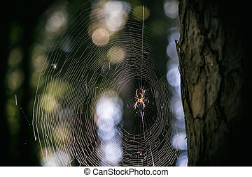 Big spider in the middle of a spider web in the forest