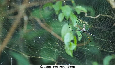 big spider on web - Close up of cobweb with spider.Big...