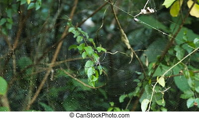 big spider on web