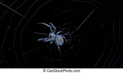 big spider the night - big spider on the night hunt