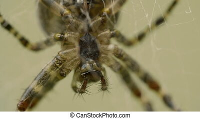 Big spider waits a victim on a web in the garden
