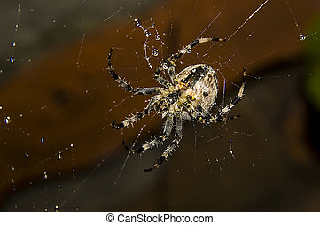 spider with water drops