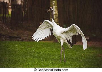 stork bird with wide open wings