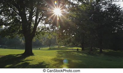 Big sunny tree in park.