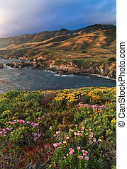 Big Sur Bloom