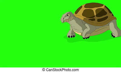 Big swamp turtle comes and goes. Handmade animated looped footage isolated on green screen
