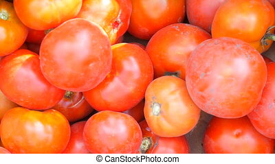 Big tasty crop of tomatoes picked from garden which lies in...
