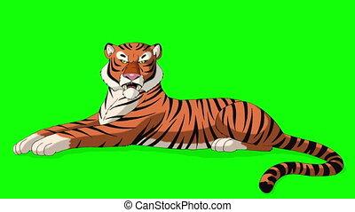 Big Tiger Lies and Growls Chroma Key - Big Tiger Lies and...