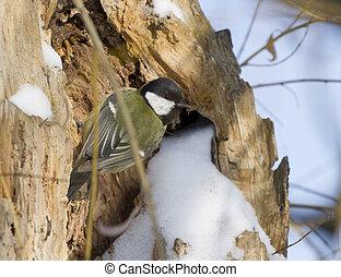 Big tit sitting on a tree.