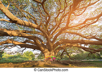 Big tree branch bottom view, natural landscape background