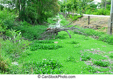 tree broken fall down at canal with trash and water hyacinth